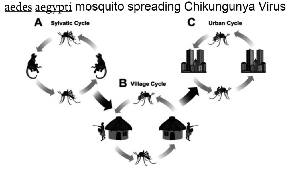 Chikungunya in Children
